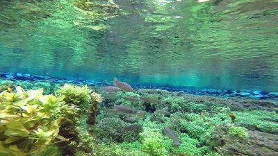 Giant Spring River